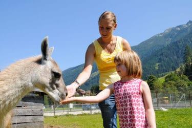 Wildpark in Untertauern, Salzburger Land